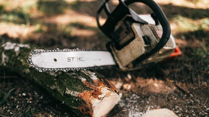悉尼砍树人因涉嫌无视警方命令离开猎人区而被捕