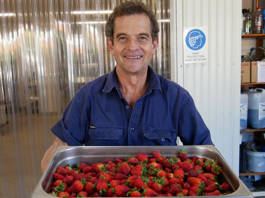 新南威尔士州的草莓种植者制作了25,000罐果酱以避免水果浪费