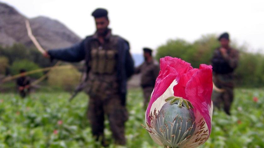 印度在喀布尔的接管混乱中查获37亿美元的阿富汗海洛因货物