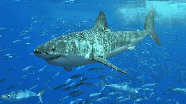 拯救鲨鱼袭击受害者的新技术包括在